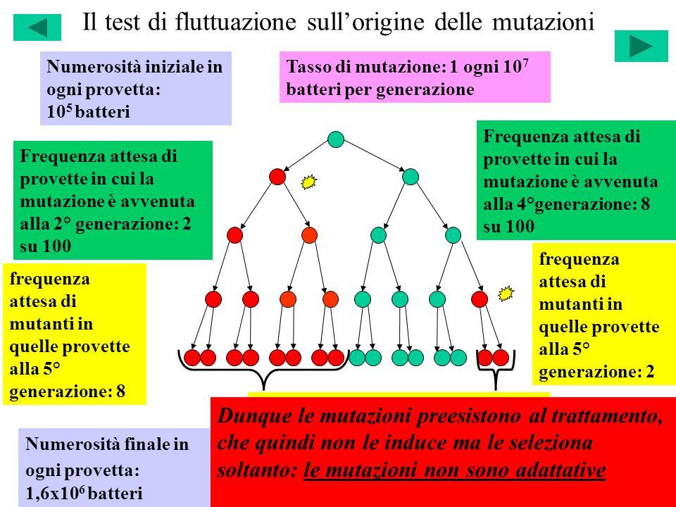 Il test di fluttuazione sull'origine delle mutazioni