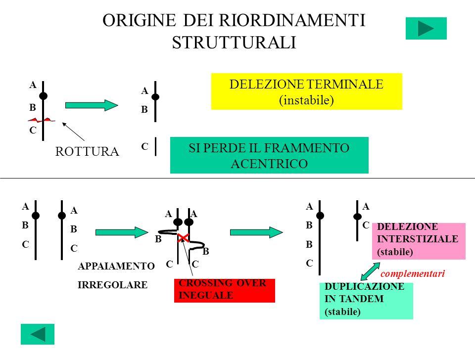 ORIGINE DEI RIORDINAMENTI STRUTTURALI