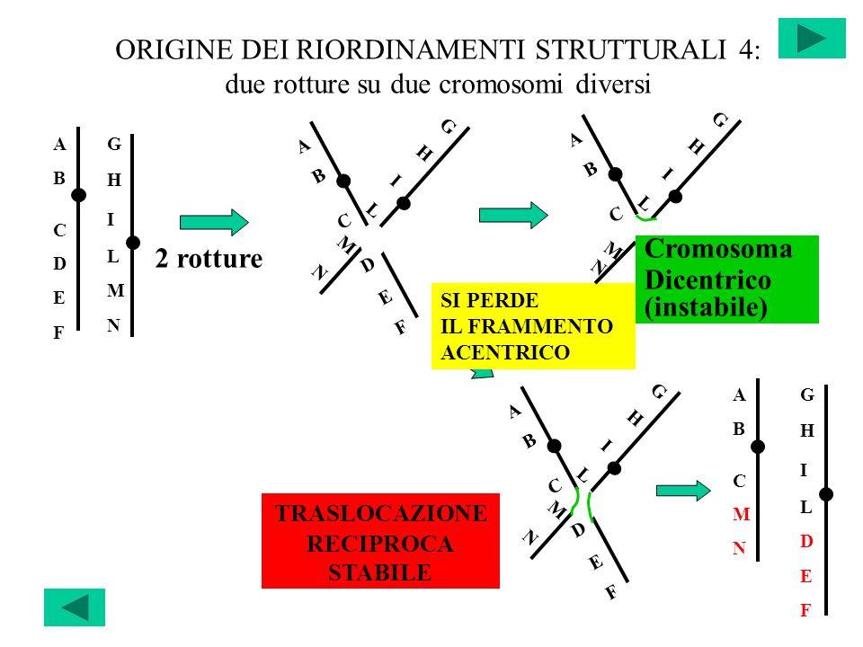 ORIGINE DEI RIORDINAMENTI STRUTTURALI 4: due rotture su due cromosomi diversi