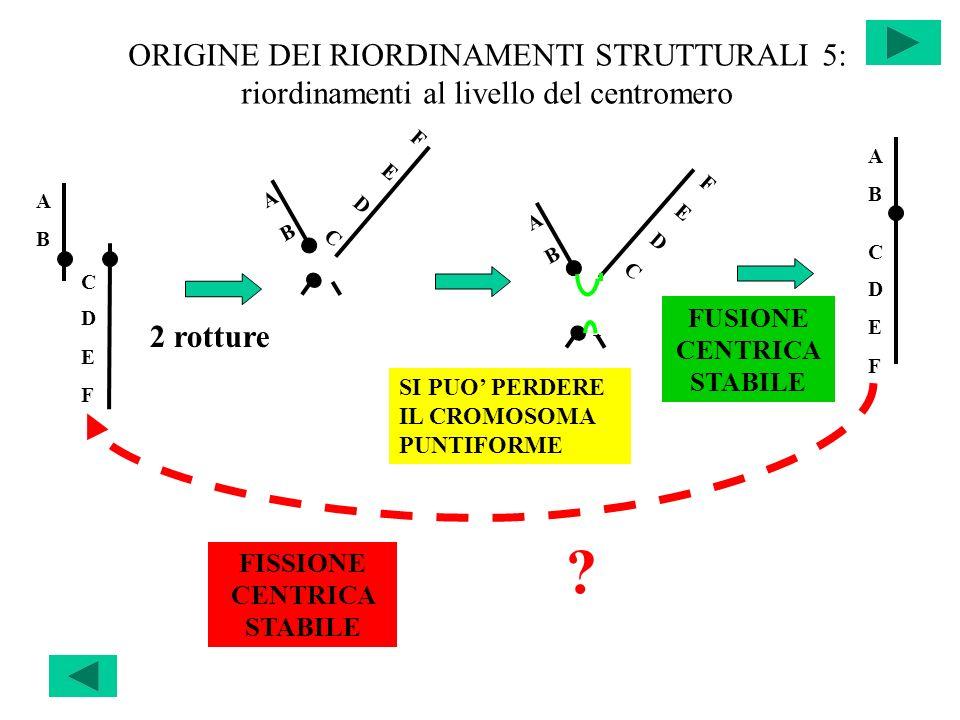 FUSIONE CENTRICA STABILE FISSIONE CENTRICA STABILE