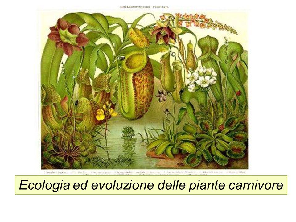 Ecologia ed evoluzione delle piante carnivore