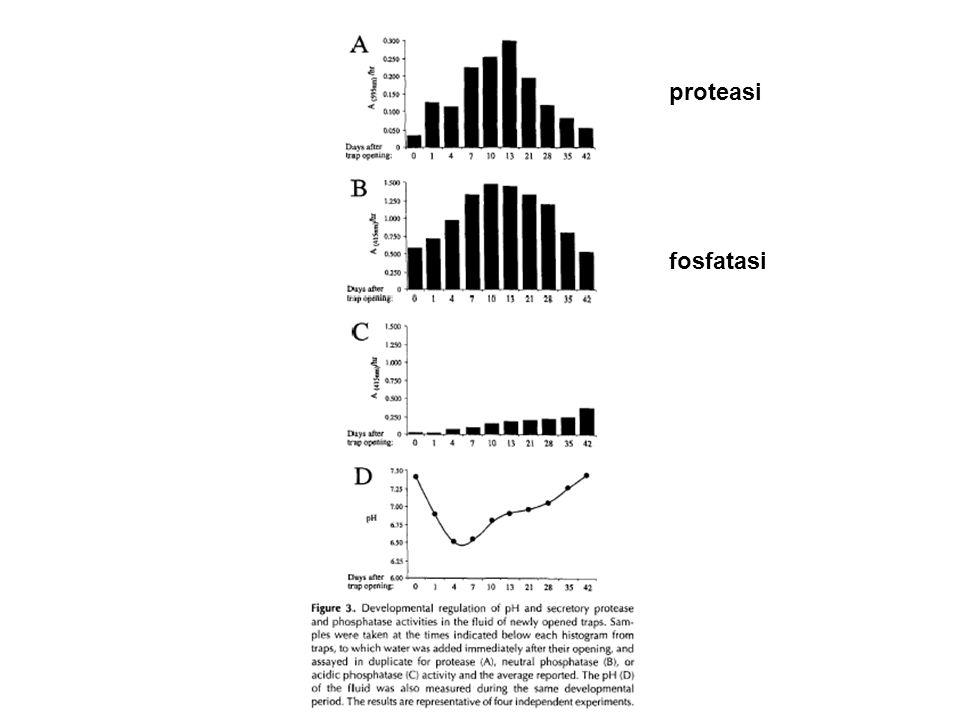 proteasi fosfatasi