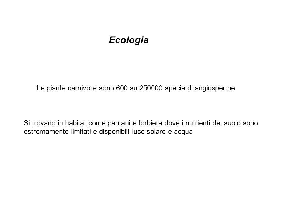 Ecologia Le piante carnivore sono 600 su 250000 specie di angiosperme