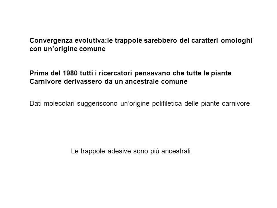 Convergenza evolutiva:le trappole sarebbero dei caratteri omologhi