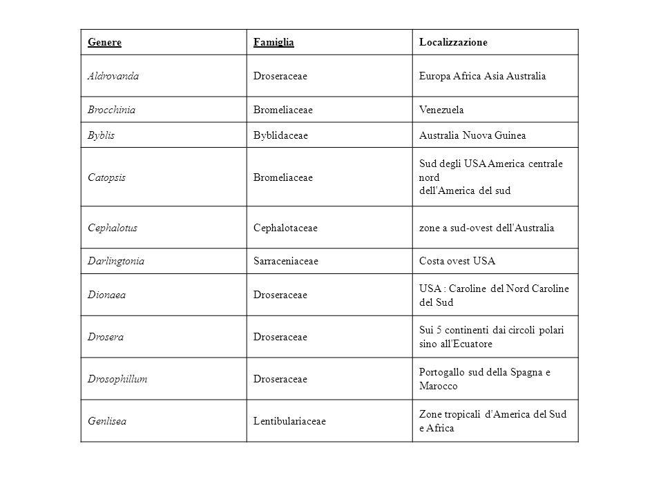 Genere Famiglia. Localizzazione. Aldrovanda. Droseraceae. Europa Africa Asia Australia. Brocchinia.