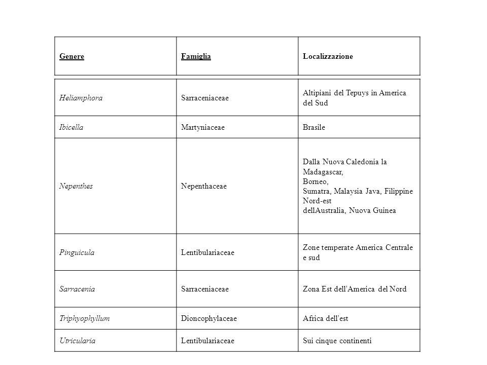 Genere Famiglia. Localizzazione. Heliamphora. Sarraceniaceae. Altipiani del Tepuys in America del Sud.