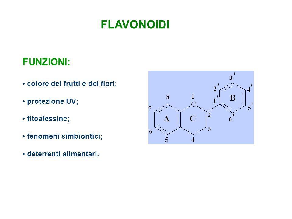 FLAVONOIDI FUNZIONI: colore dei frutti e dei fiori; protezione UV;
