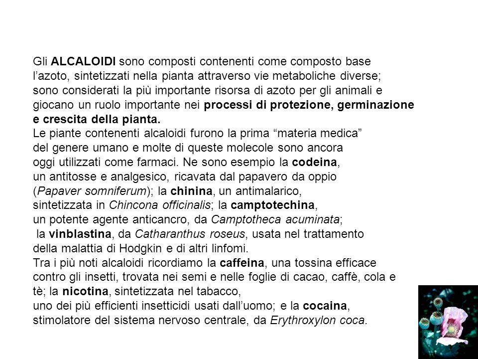 Gli ALCALOIDI sono composti contenenti come composto base