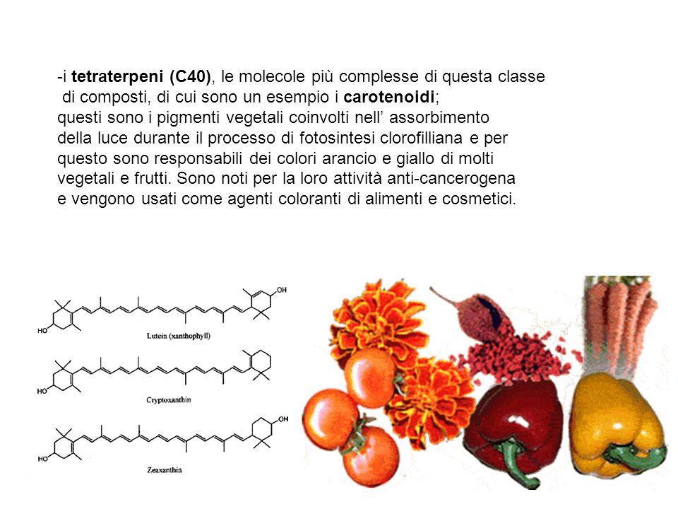 i tetraterpeni (C40), le molecole più complesse di questa classe