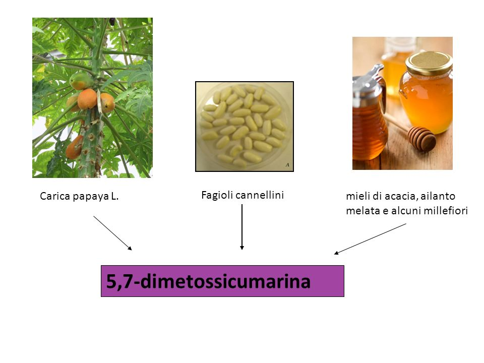 5,7-dimetossicumarina Carica papaya L. Fagioli cannellini