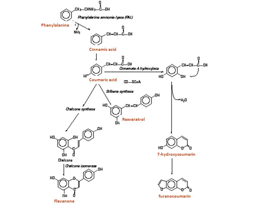 Phenylalanine Cinnamic acid Coumaric acid Resveratrol 7-hydroxycoumarin furanocoumarin Flavanone