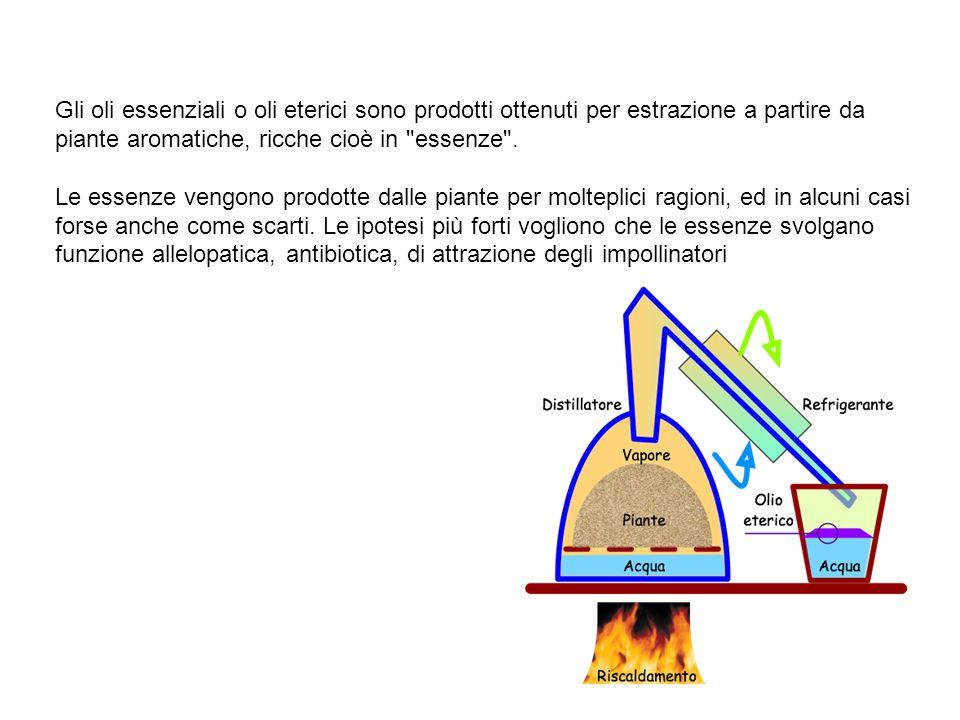 Gli oli essenziali o oli eterici sono prodotti ottenuti per estrazione a partire da piante aromatiche, ricche cioè in essenze .