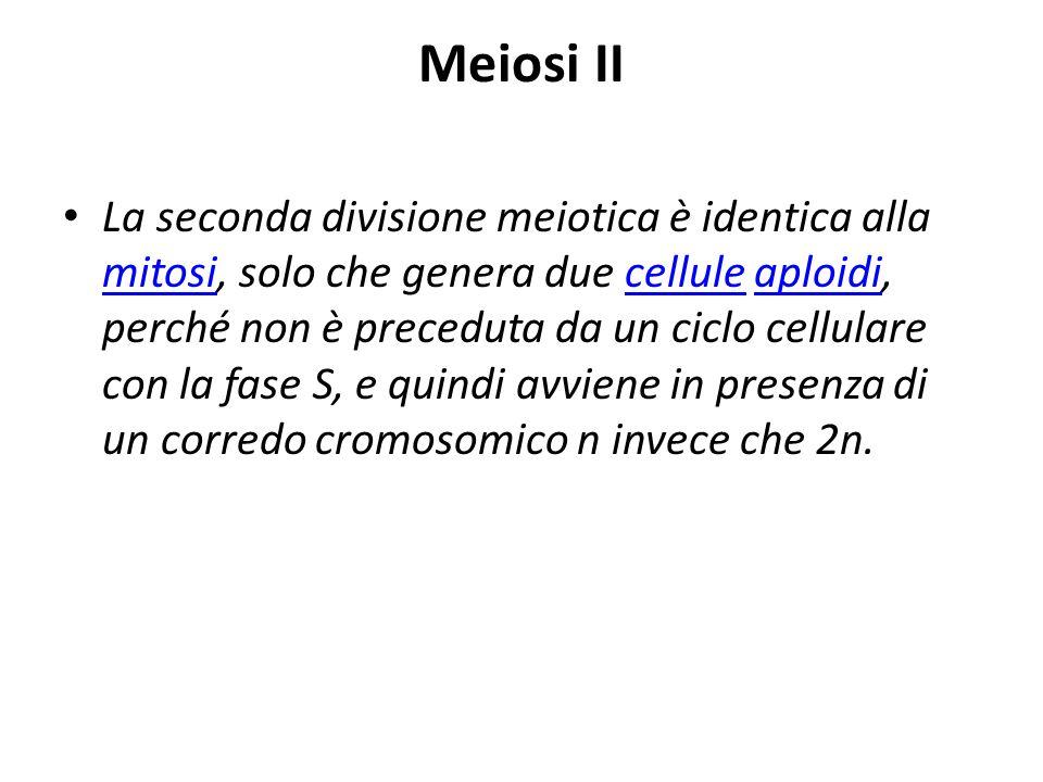 Meiosi II