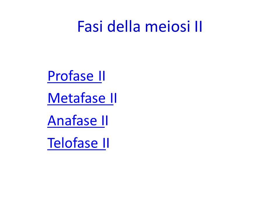 Fasi della meiosi II Profase II Metafase II Anafase II Telofase II 23
