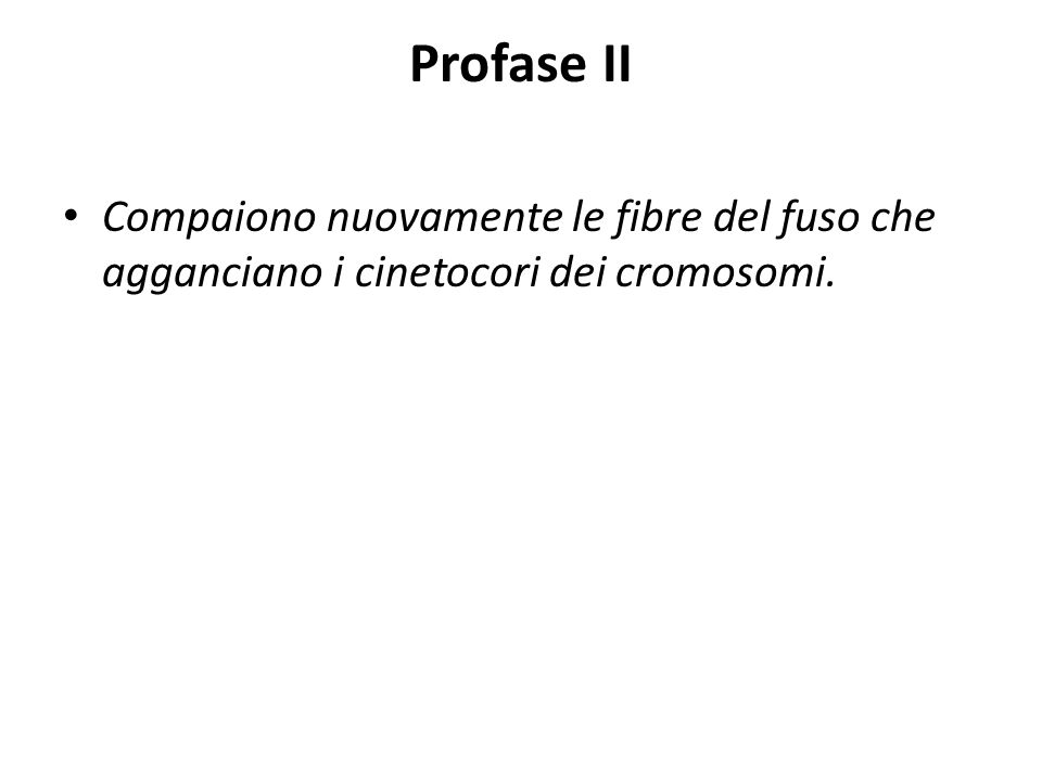 Profase II Compaiono nuovamente le fibre del fuso che agganciano i cinetocori dei cromosomi.