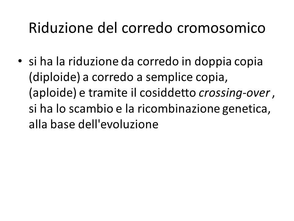 Riduzione del corredo cromosomico