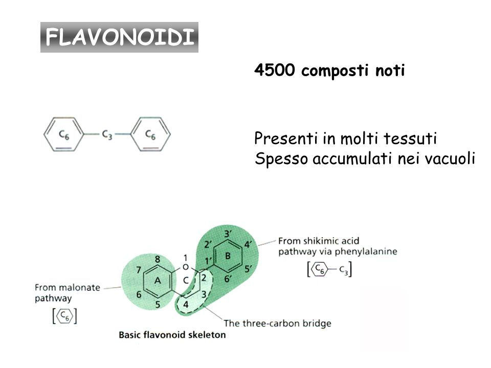 FLAVONOIDI 4500 composti noti Presenti in molti tessuti