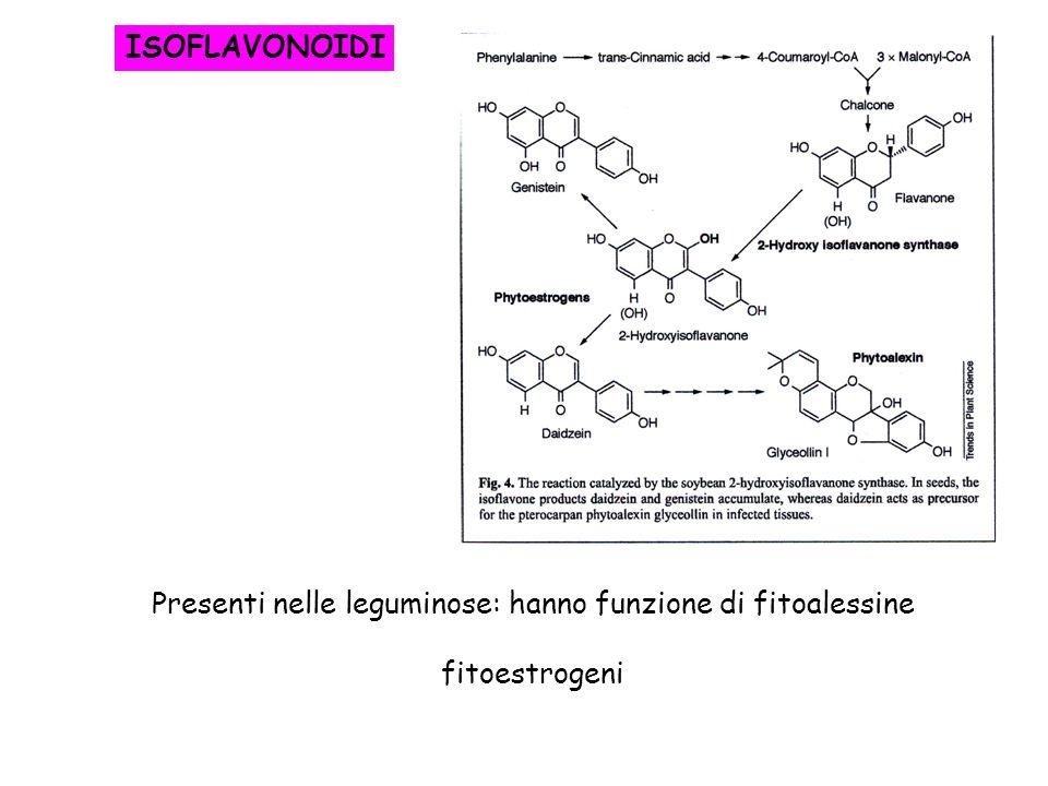 Presenti nelle leguminose: hanno funzione di fitoalessine
