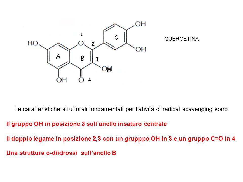 1 C. QUERCETINA. 2. A. B. 3. H. 4. Le caratteristiche strutturali fondamentali per l'atività di radical scavenging sono: