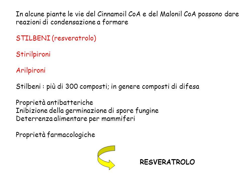 In alcune piante le vie del Cinnamoil CoA e del Malonil CoA possono dare