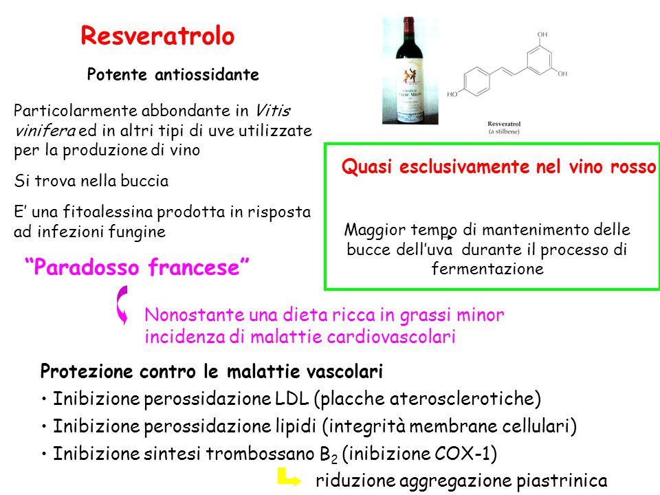 Resveratrolo Paradosso francese Quasi esclusivamente nel vino rosso