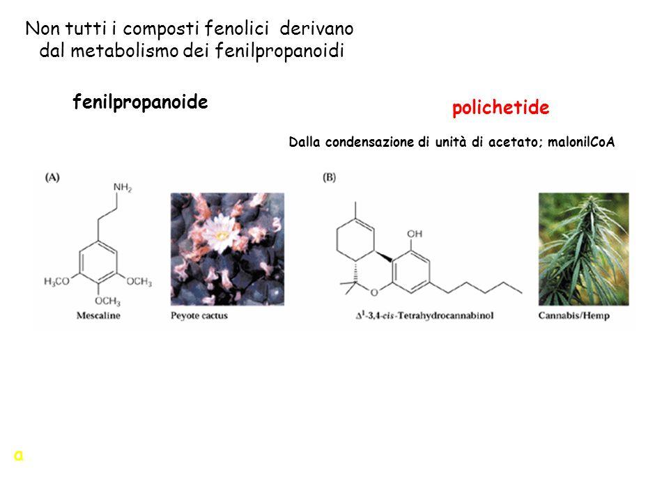 Dalla condensazione di unità di acetato; malonilCoA
