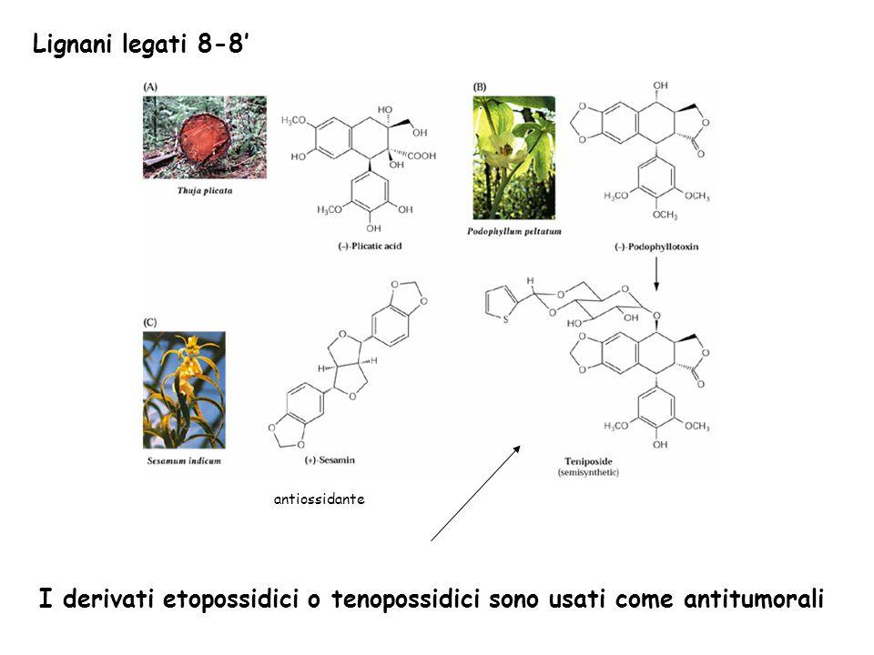 I derivati etopossidici o tenopossidici sono usati come antitumorali