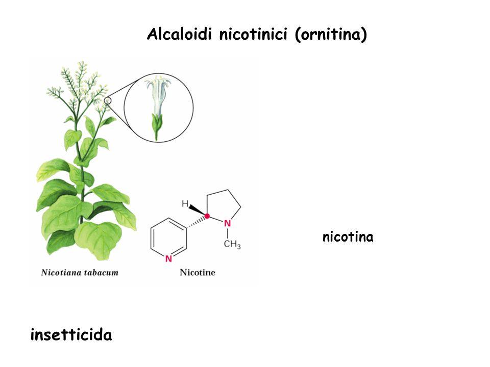 Alcaloidi nicotinici (ornitina)