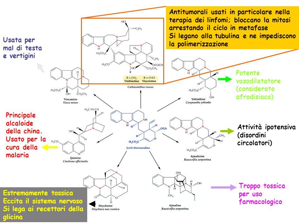 Antitumorali usati in particolare nella terapia dei linfomi; bloccano la mitosi arrestando il ciclo in metafase