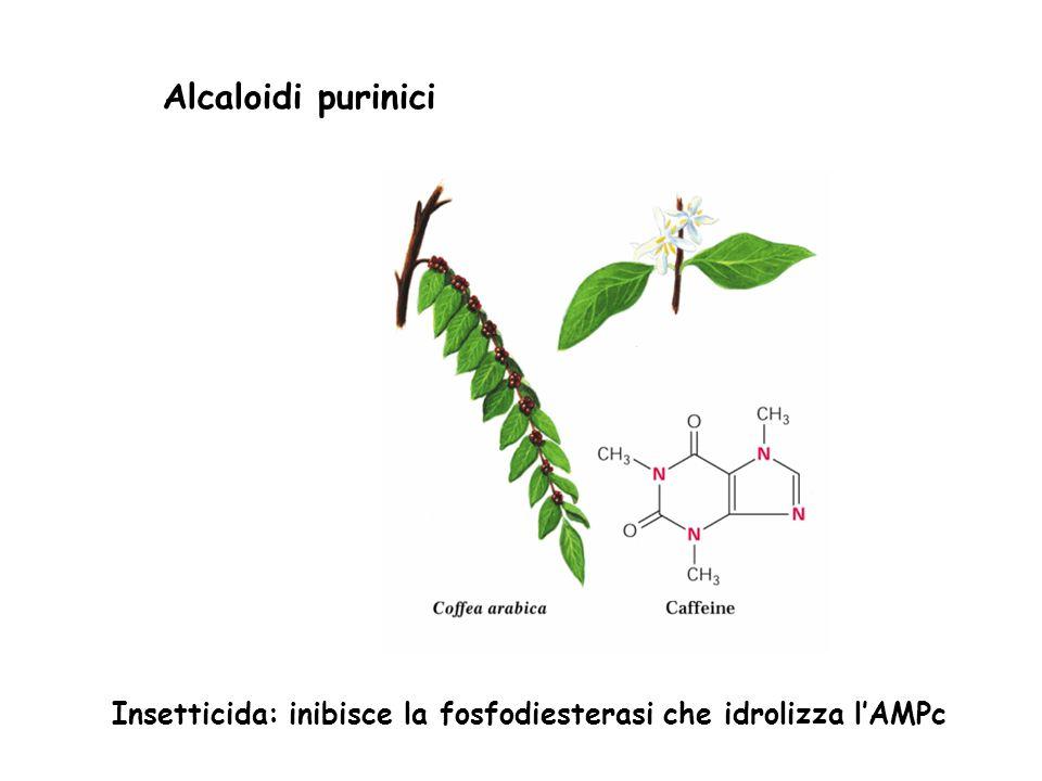 Insetticida: inibisce la fosfodiesterasi che idrolizza l'AMPc