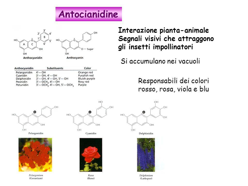 Antocianidine Interazione pianta-animale
