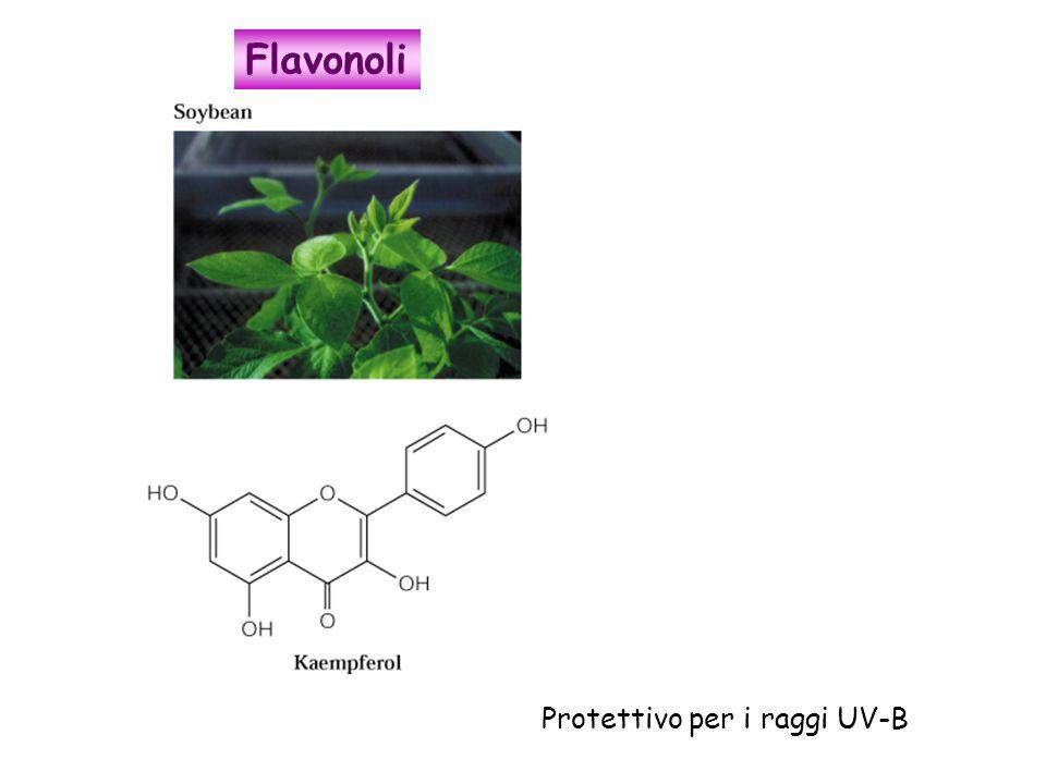 Protettivo per i raggi UV-B