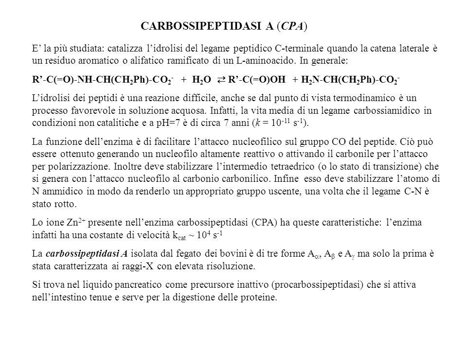 CARBOSSIPEPTIDASI A (CPA)