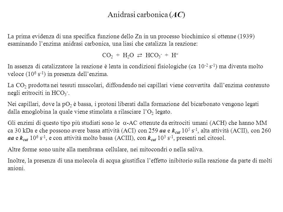 Anidrasi carbonica (AC)