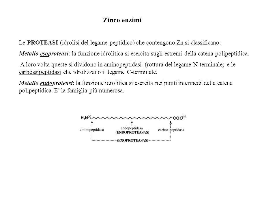 Zinco enzimi Le PROTEASI (idrolisi del legame peptidico) che contengono Zn si classificano: