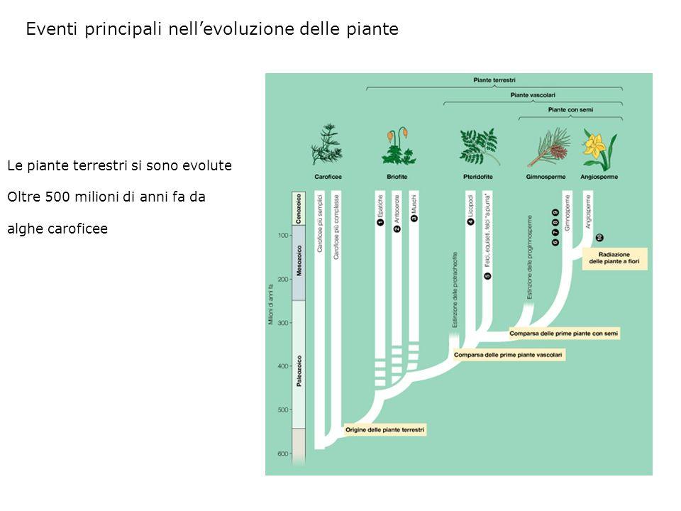 Eventi principali nell'evoluzione delle piante