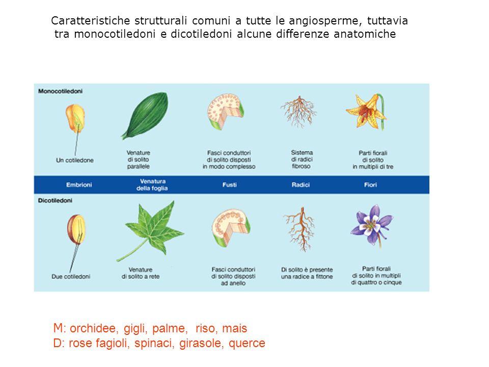 M: orchidee, gigli, palme, riso, mais