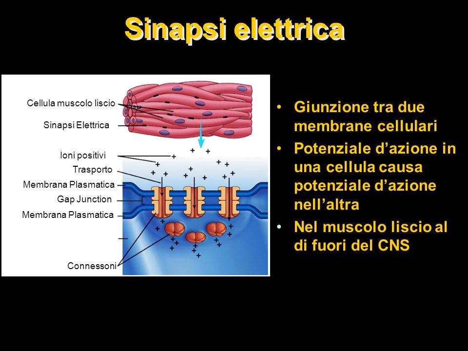 Cellula muscolo liscio
