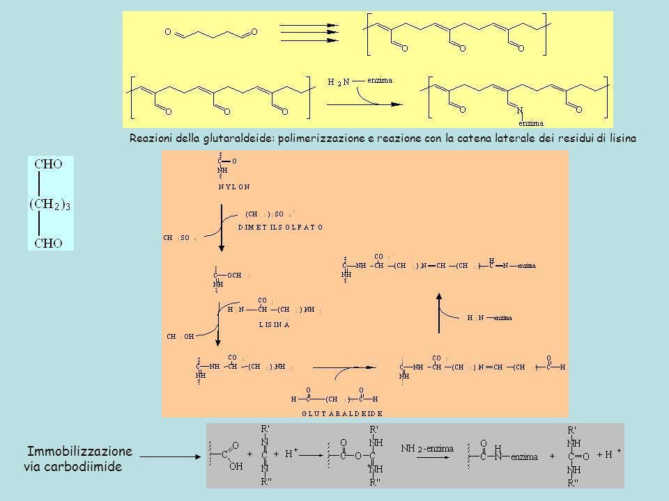 Reazioni della glutaraldeide: polimerizzazione e reazione con la catena laterale dei residui di lisina
