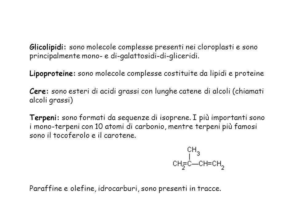 Glicolipidi: sono molecole complesse presenti nei cloroplasti e sono principalmente mono- e di-galattosidi-di-gliceridi.