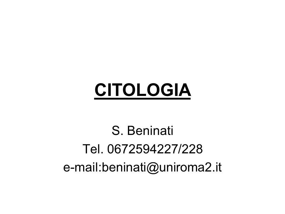 S. Beninati Tel. 0672594227/228 e-mail:beninati@uniroma2.it