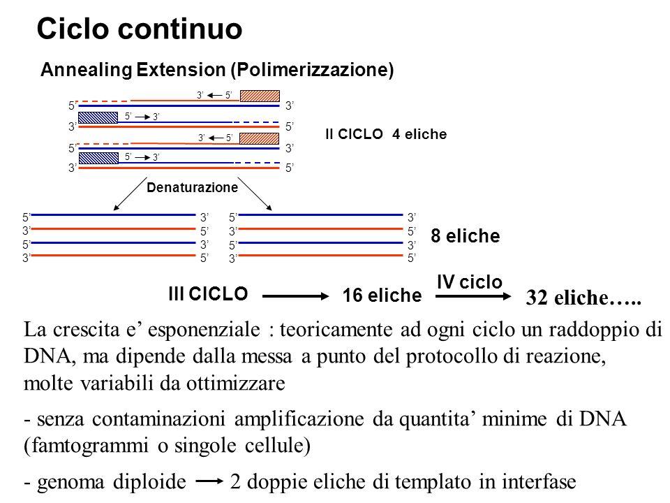 Ciclo continuo 32 eliche…..