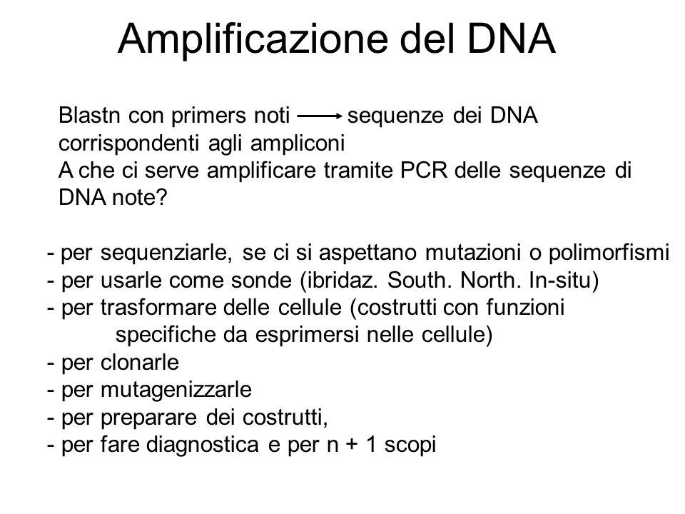 Amplificazione del DNA