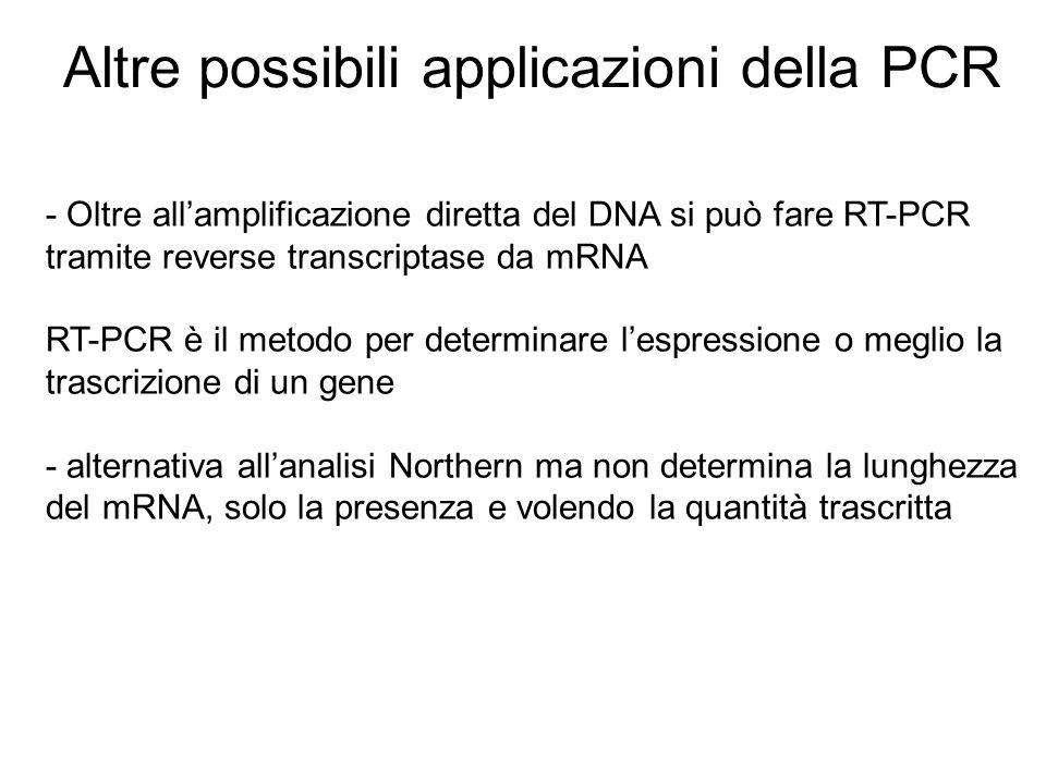 Altre possibili applicazioni della PCR
