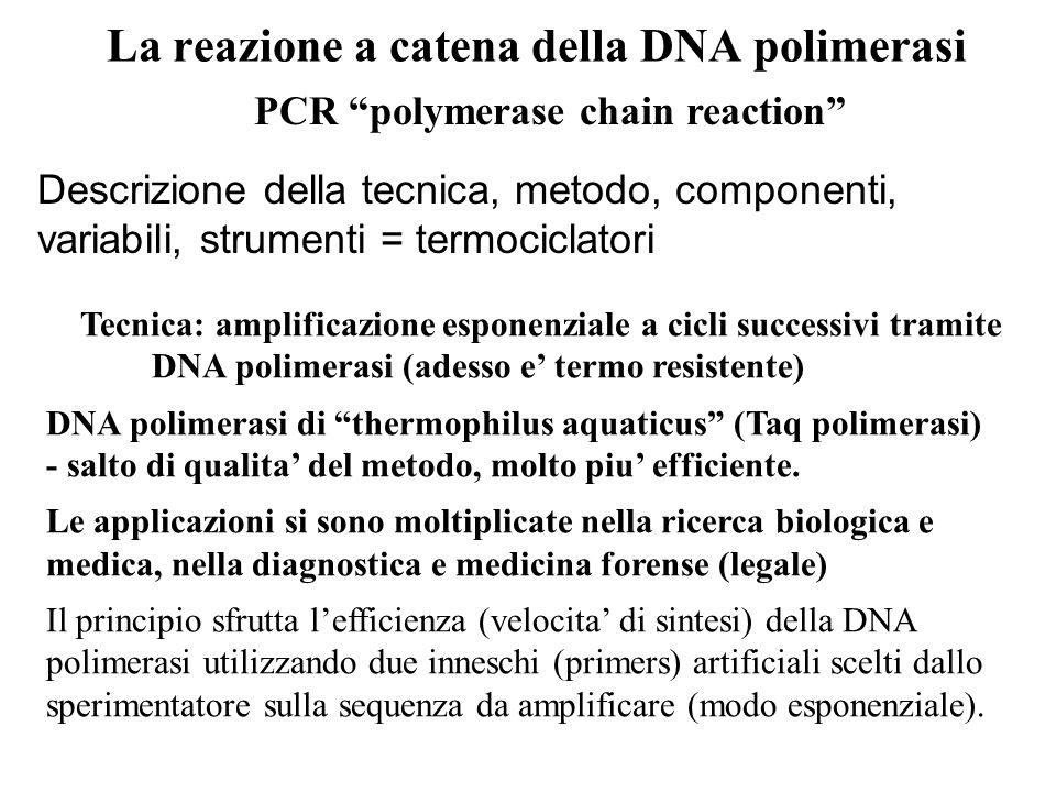 La reazione a catena della DNA polimerasi