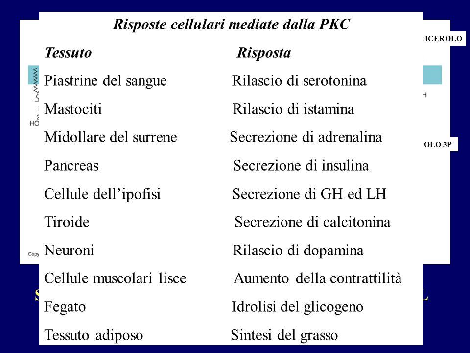 Risposte cellulari mediate dalla PKC