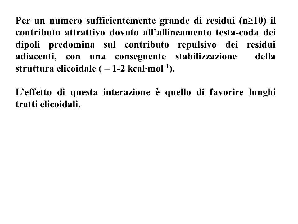 Per un numero sufficientemente grande di residui (n10) il contributo attrattivo dovuto all'allineamento testa-coda dei dipoli predomina sul contributo repulsivo dei residui adiacenti, con una conseguente stabilizzazione della struttura elicoidale ( – 1-2 kcal·mol-1).
