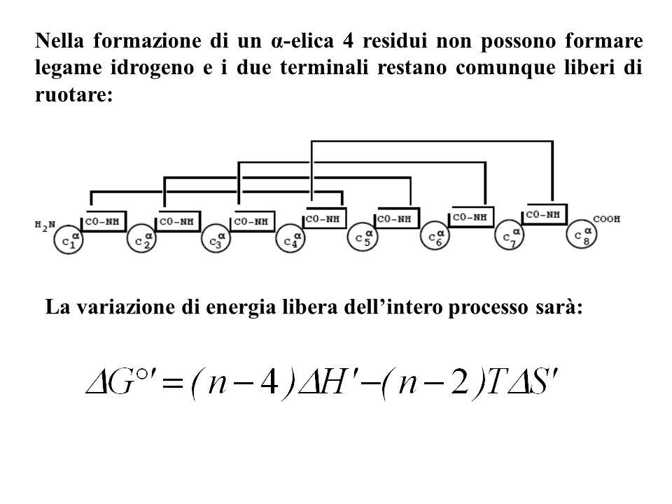 Nella formazione di un α-elica 4 residui non possono formare legame idrogeno e i due terminali restano comunque liberi di ruotare: