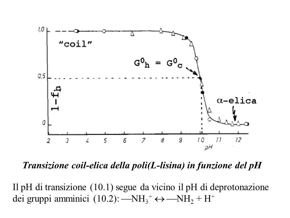 Transizione coil-elica della poli(L-lisina) in funzione del pH