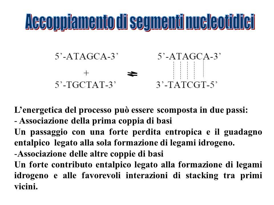 Accoppiamento di segmenti nucleotidici